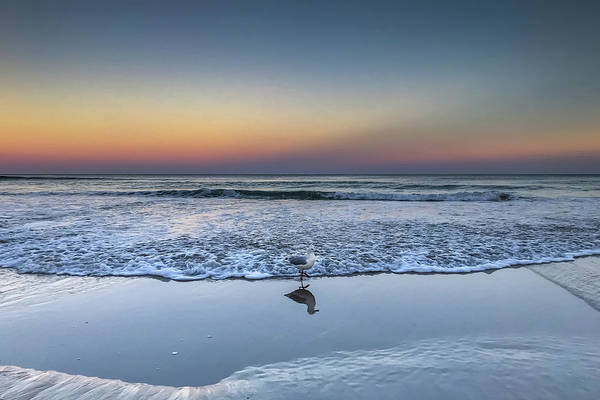 Photograph - Seagull On The Beach by Uncle Arny