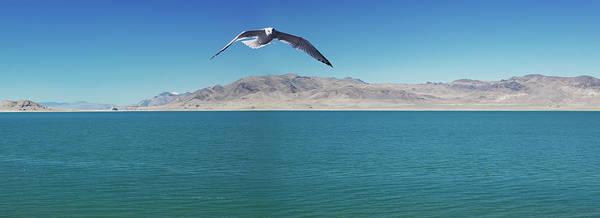 Wall Art - Photograph - Seagull Over Pyramid Lake by Richard Desmarais / Design Pics