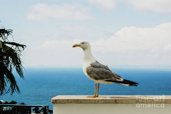 Photograph - Seagull Posing For The Photographer With The Background Of The B by Joaquin Corbalan