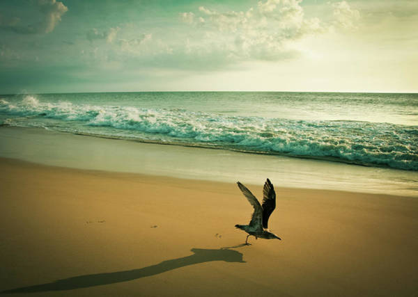 Rehoboth Beach Photograph - Seagull Take Off by Diana Kehoe Photography