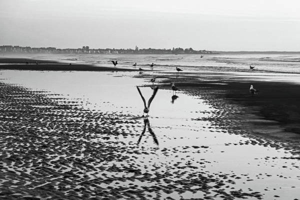 Photograph - Seagull Taking Off From Ogunquit Beach Ogunquit Maine Black And White by Toby McGuire