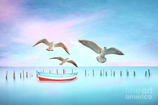 Wall Art - Photograph - Seagulls And Boat by Laura D Young