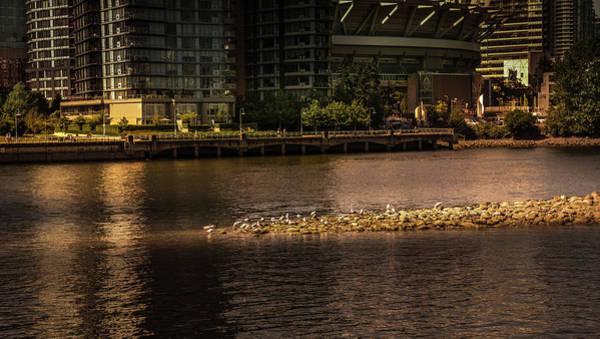 Photograph - Seagulls And Ducks by Juan Contreras