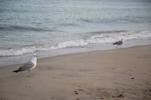 Photograph - Seagulls At Misquamicut by Kirkodd Photography Of New England