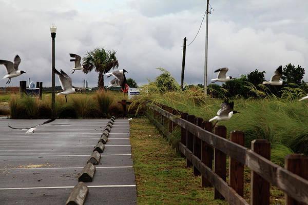 Wall Art - Photograph - Seagulls At Port St. Joe Marina by Toni Hopper