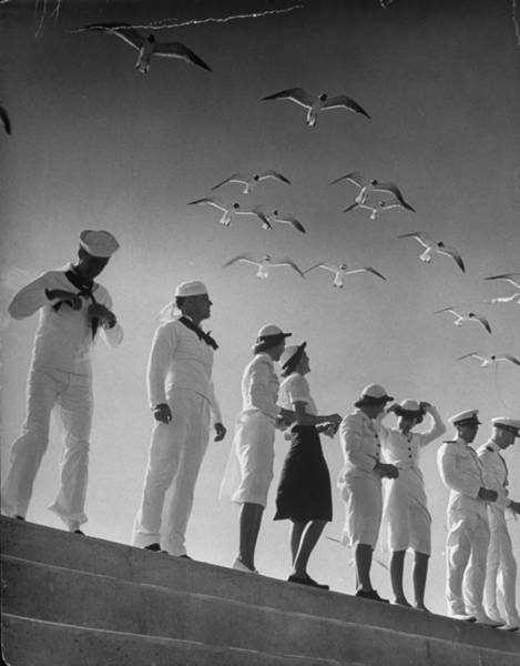 Usa Navy Photograph - Seagulls Flying Above Group Of Sailors by Alfred Eisenstaedt