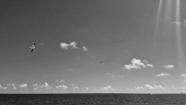 Photograph - Seagulls Flying Over The Bay by Rachel Hannah