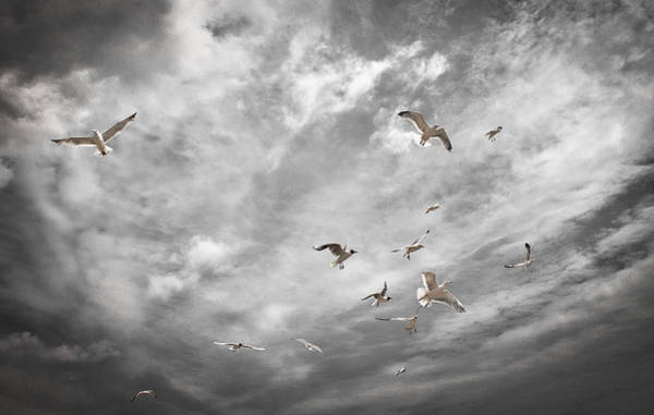 Photograph - Seagulls In Flight by David Resnikoff