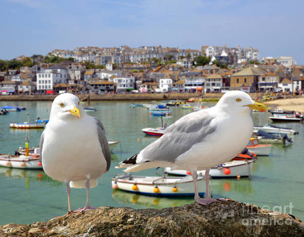 Harbour Wall Art - Photograph - Seagulls In St Ives Harbour Cornwall by Jaroslava V