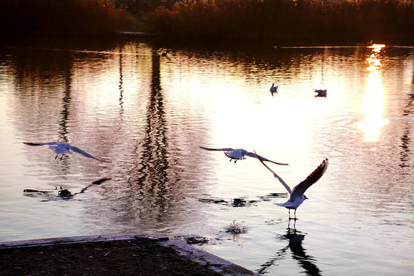 Photograph - Seagulls In The Morning by Mariella Wassing