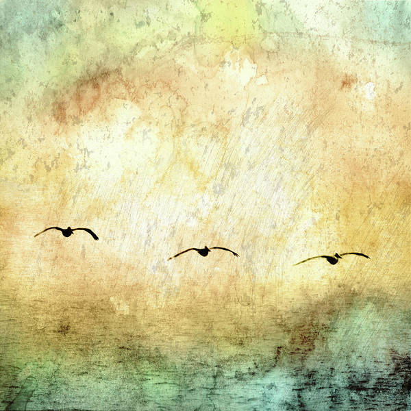 Wall Art - Photograph - Seagulls In The Sky Square IIi by Ynon Mabat