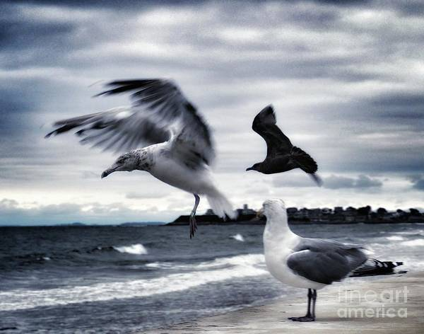 Photograph - Seagulls by Mary Capriole