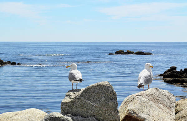 Waters Edge Photograph - Seagulls by Nicolecioe