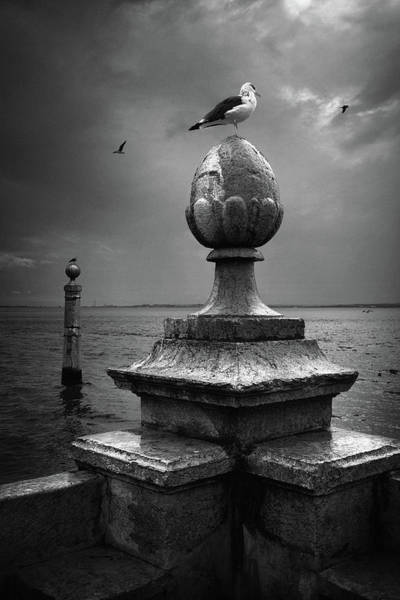 Wall Art - Photograph - Seagulls Of The Tagus by Carlos Caetano