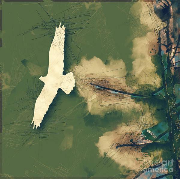 Photograph - Seahawk Flying Away by Matthew Nelson