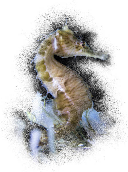 Photograph - Seahorse by Patti Deters