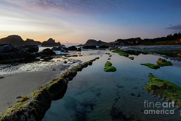 Wall Art - Photograph - Seal Rock Tide Pools by Mike Dawson