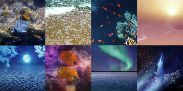 Photograph - Sealife And Seashore Collage Horizontal 1 by Johanna Hurmerinta