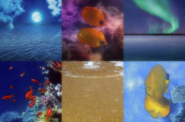 Photograph - Sealife And Seashore Collage Horizontal 2 by Johanna Hurmerinta