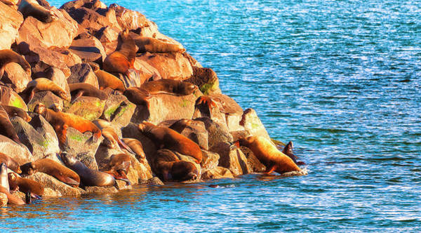 Photograph - Seals Gathering Rock Pile by Dee Browning