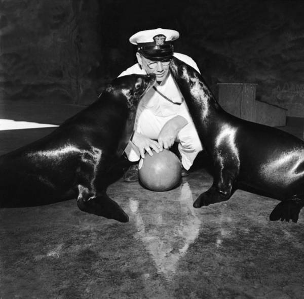 Playful Photograph - Seals Love Keeper by Evans