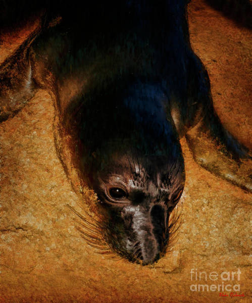 Photograph - Seal's Nose In The Sand  by Blake Richards