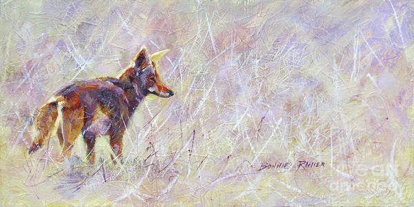 Coyote Painting - Searching by Bonnie Rinier