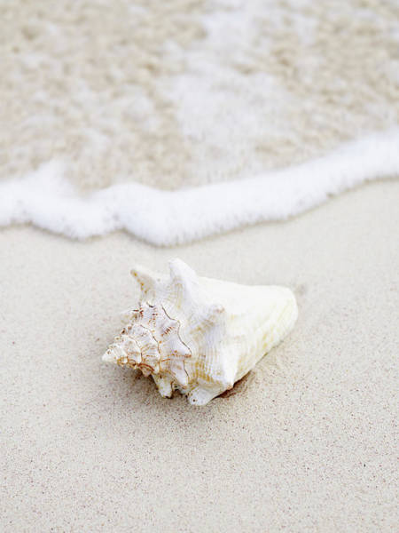 Waters Edge Photograph - Seashell At Waters Edge On Tropical by Thomas Barwick
