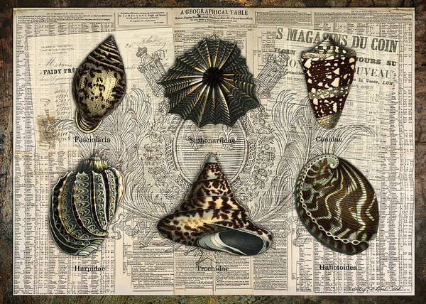 Digital Art - Seashell Collection One by Terry Kirkland Cook