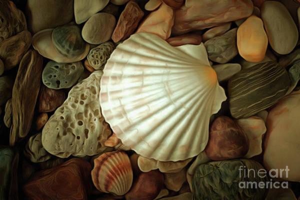 Wall Art - Digital Art - Seashell On Sea Pebbles by Michal Boubin