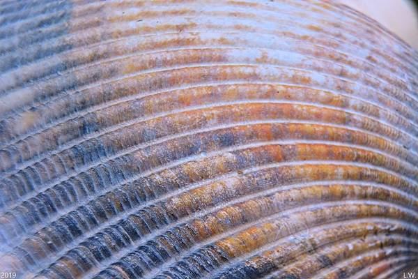 Photograph - Seashell Ripples by Lisa Wooten