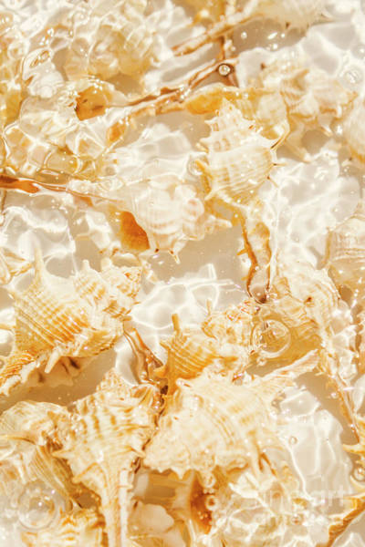 Wall Art - Photograph - Seashell Tropics by Jorgo Photography - Wall Art Gallery