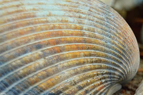 Photograph - Seashell Waves by Lisa Wooten