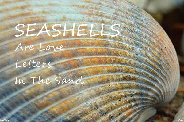 Photograph - Seashells Are Love Letters In The Sand by Lisa Wooten