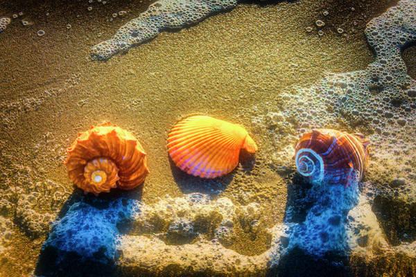 Three Seashells Photograph - Seashells At The Sea Shore by Garry Gay