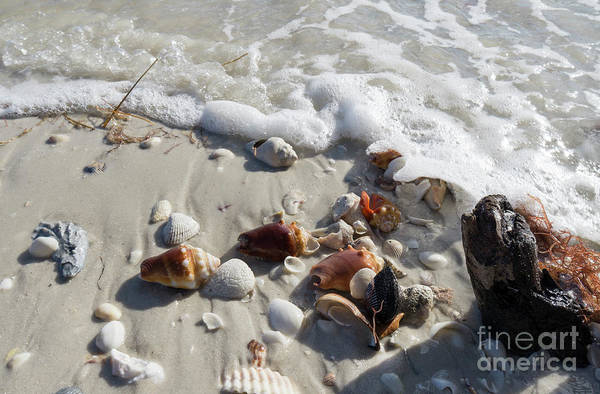 Wall Art - Photograph - Seashells Wash Up On The Beach At Wiggins Pass In Collier County by William Kuta