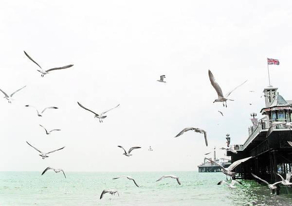 Palace Pier Wall Art - Photograph - Seaside Seagulls by Richard Newstead