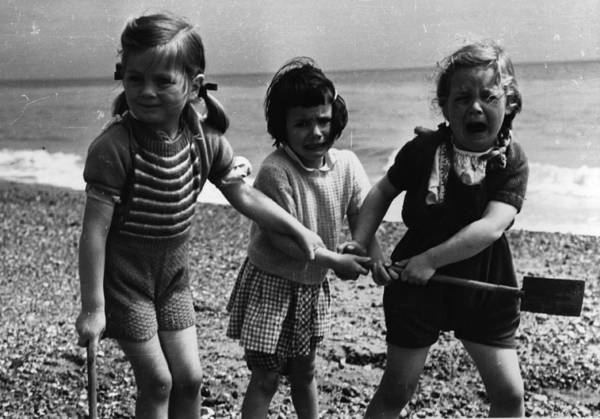 Determination Photograph - Seaside Squabble by Merlyn Severn