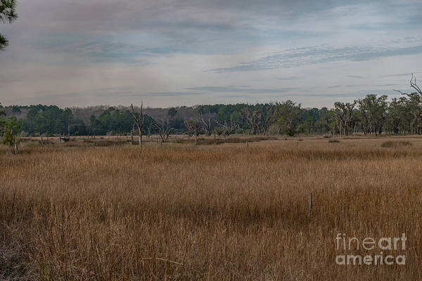 Photograph - Season Of The Marsh by Dale Powell
