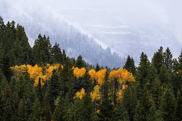 Photograph - Seasonal Contrast by Michael Ash