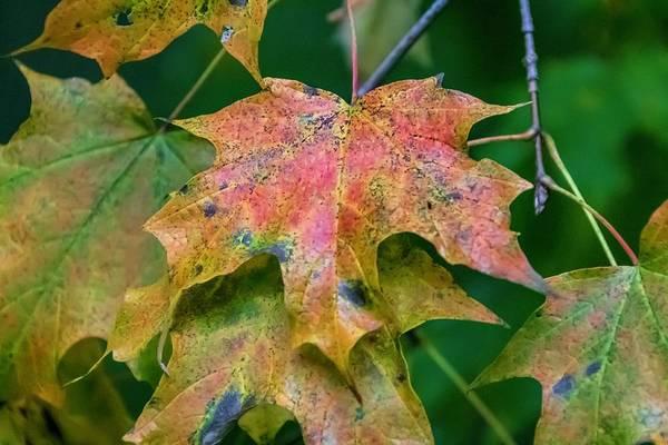 Photograph - Seasonal Layering by Terri Hart-Ellis