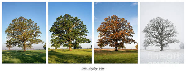Photograph - Seasonal Oak by Tim Gainey