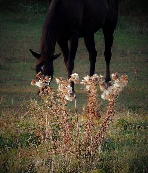 Photograph - Seasons by Wild Thing