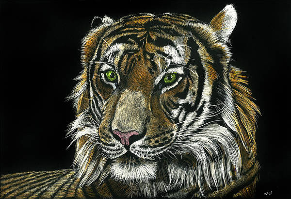 Drawing - Seated Tiger by William Underwood