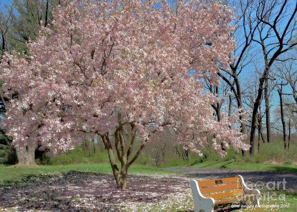 Photograph - Seating By Magnolia by Tami Quigley