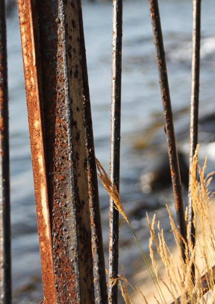 Photograph - Seaview Through The Fence by Sannel Larson