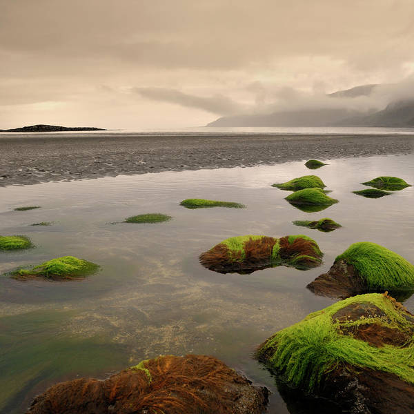 Seaweed Photograph - Seaweed At Lochbuie by Alasdairjames