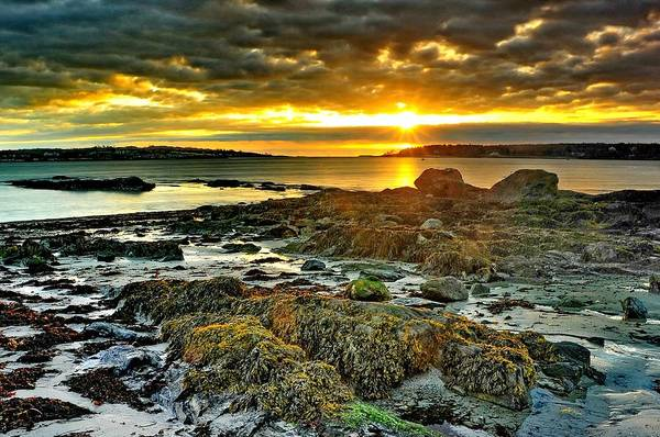 Seaweed Photograph - Seaweed Sunrise by Frameworthyfotography By Thadd