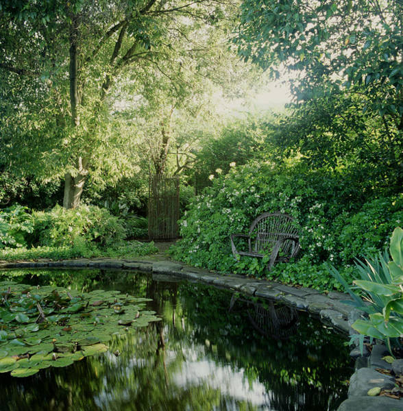 Vertical Garden Photograph - Secluded Garden Pond With Sunlight And by Sandra Ivany