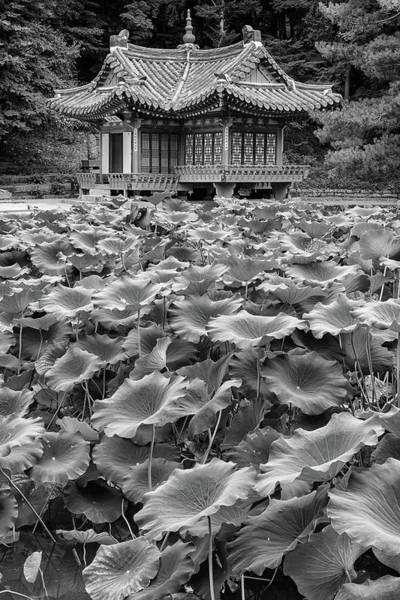 Photograph - Secret Garden In Black And White by Rick Berk